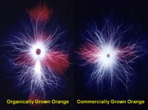 organic orange VS other bio